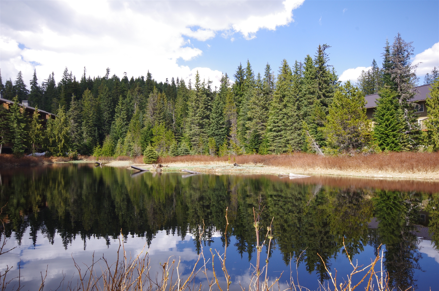 Walking Trails Around Collins Lake